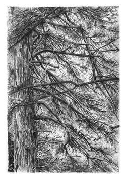 Entre mes branches