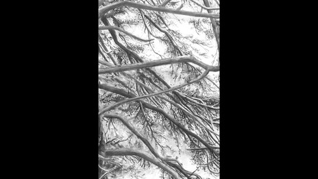 Entre mes branches - animation
