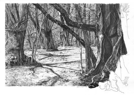 Notre forêt - Hommage à mon père