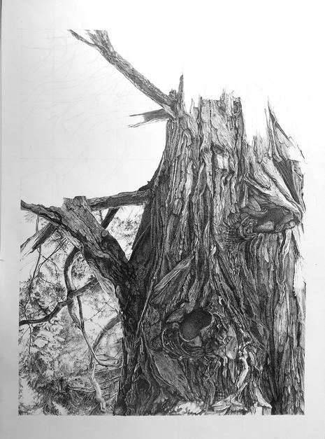 Le tronc (en cours)