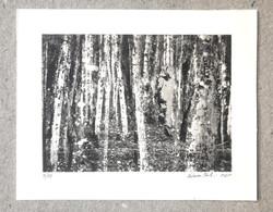 Une licorne perdue dans les bois