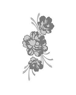 Dessin Illustrator