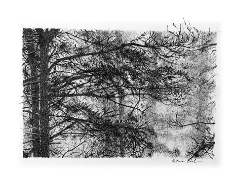 Les branches qui dansent