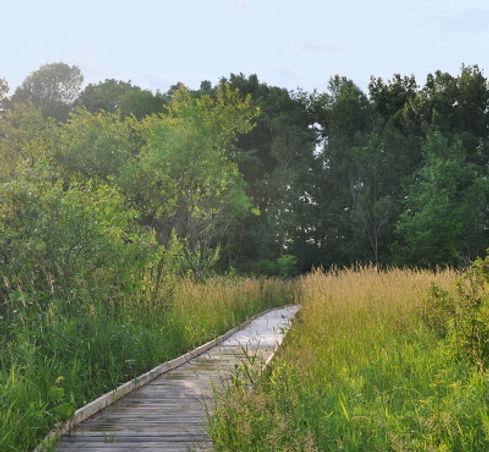 wetland-trail.jpeg