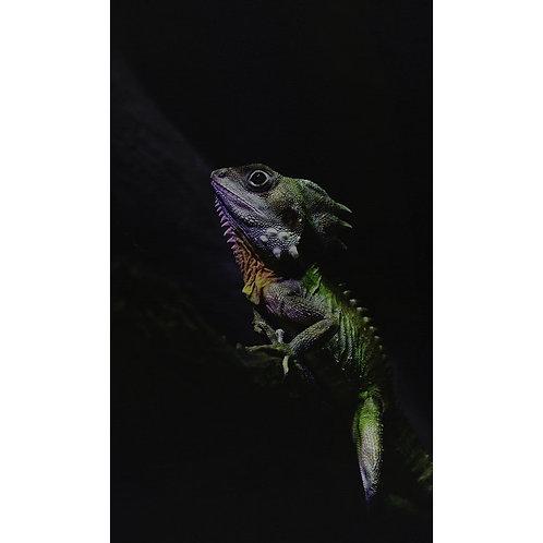 Wanddecoratie gekko