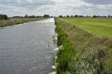 Fenlands River bank