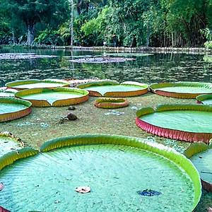 Botanical Garden: Science&Culture