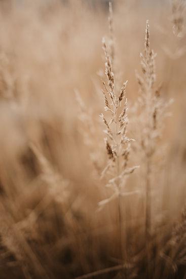 Gras-7.jpg