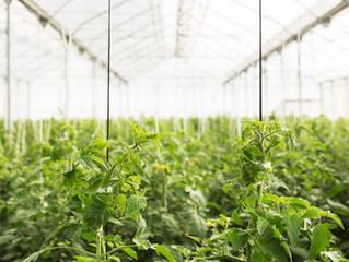 Embrapa realizará Workshop sobre cultivo de hortaliças em ambiente protegido