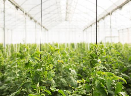 Le marché de la Bio au bord de la destructuration !