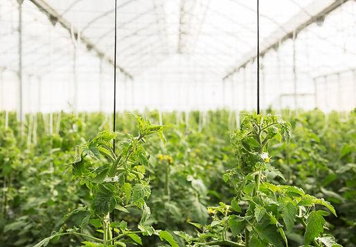 orisha-serre-greenhouse