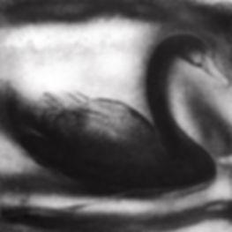 Brian D. Cohen, Black Swan, 2016, etchin