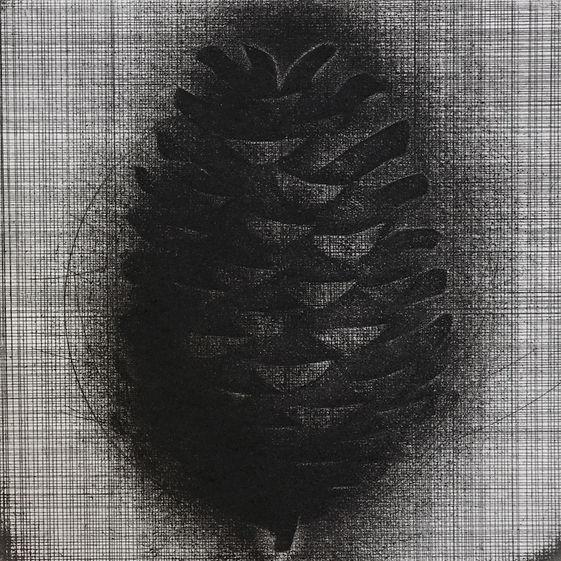 Brian D Cohen Pine Cone.jpg