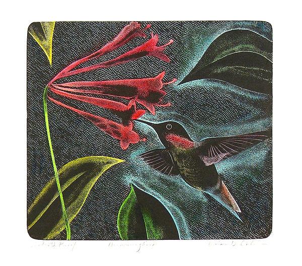 Hummingbird League Image.jpeg
