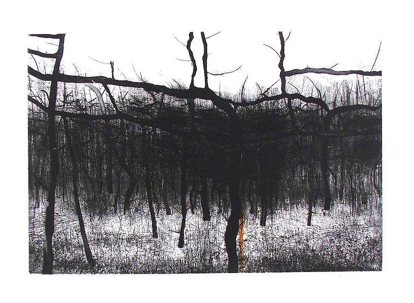 The Wood.jpeg