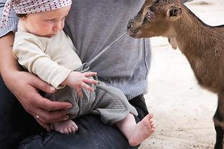 赤ちゃんのズボンのドローストリングを引っ張るヤギ