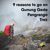 9 Reasons to go on Gunung Gede Pangrango Trek.