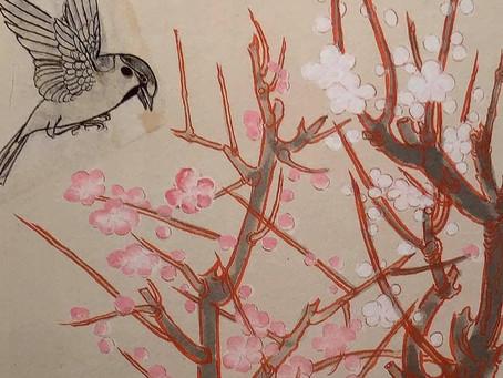 白い雀のお話 速水御舟の絶筆