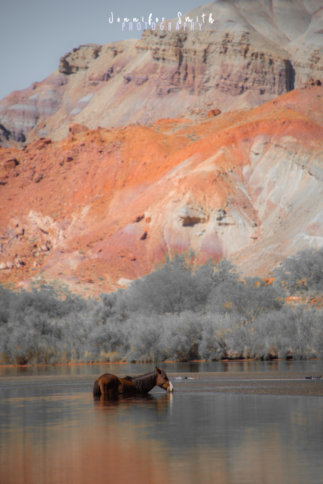 Wild Mustang AZ