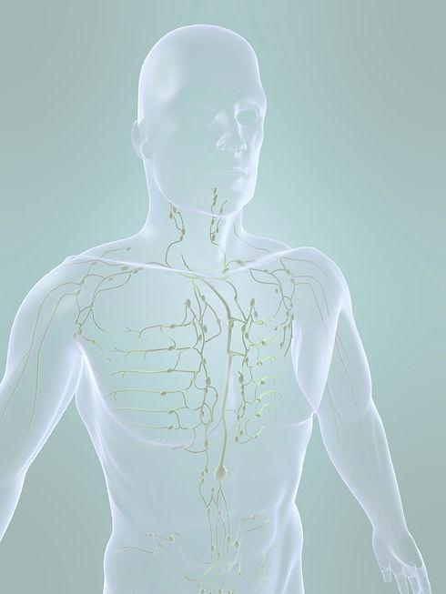 lymphatic system_edited_edited.jpg
