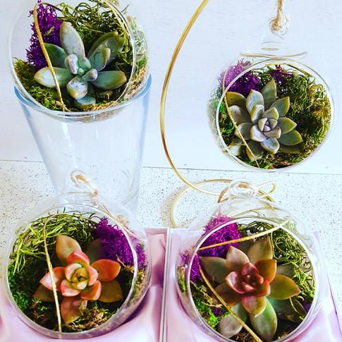 Succulent terrarium display