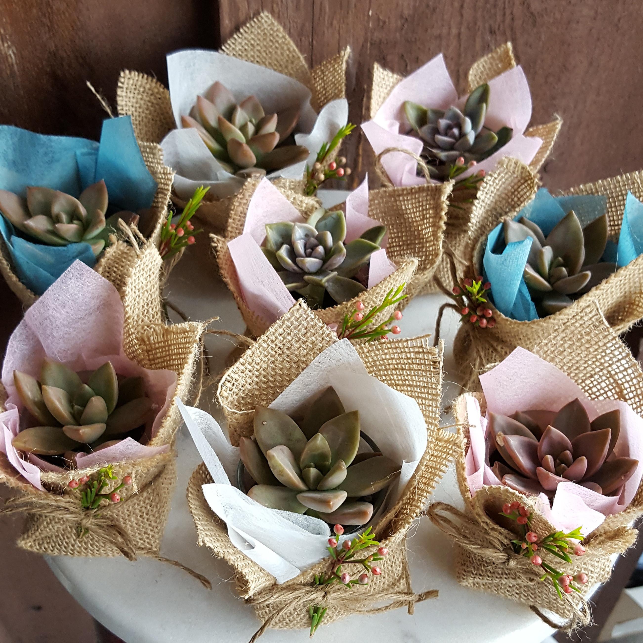 Mini Succulent Gift With Burlap