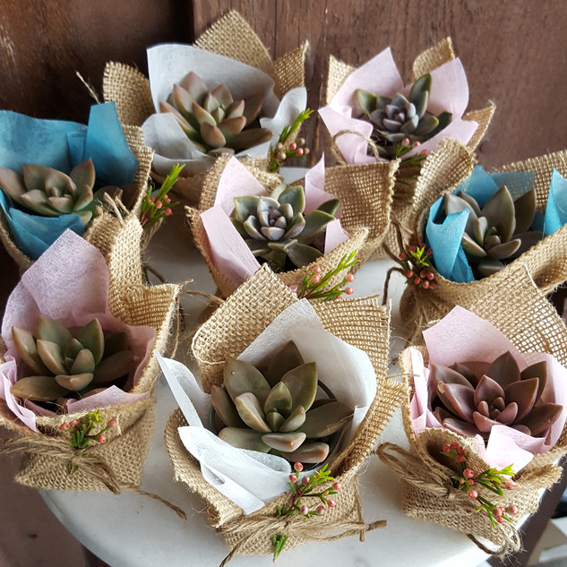 Mini succulent gift with burlap