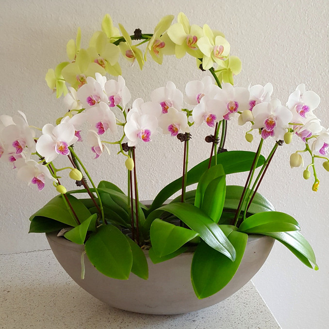 Orchid arrangement bowl