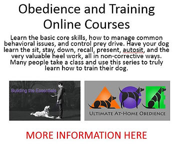 Obedience Courses Raw.JPG