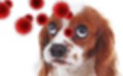 Worried Dog and Corona Virus.jpg