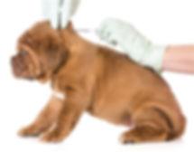 dog vaccine.jpg