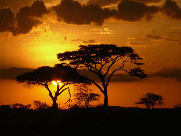 Serengeti Sunset