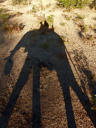 Elephant-Walk-Shadow-Zambia-.jpg