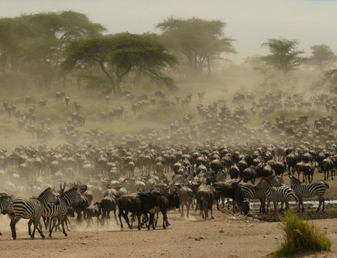 Serengeti-Migration-2.jpg