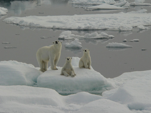 Polar-Bear-Family-Svalbard-2007.jpg