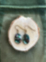 paua shell 12111.JPG