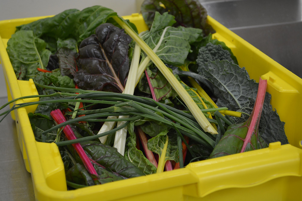 God's garden goodness... click here for some benefits of Swiss Chard...