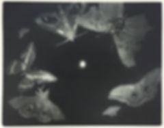 moth 10.jpg