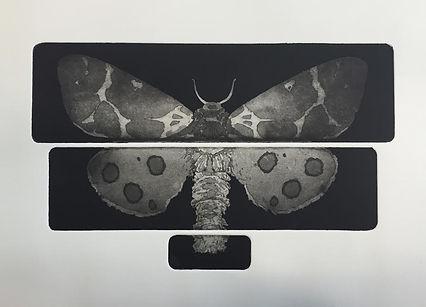 moth 6 Tiger Moth (Aquatint).jpg