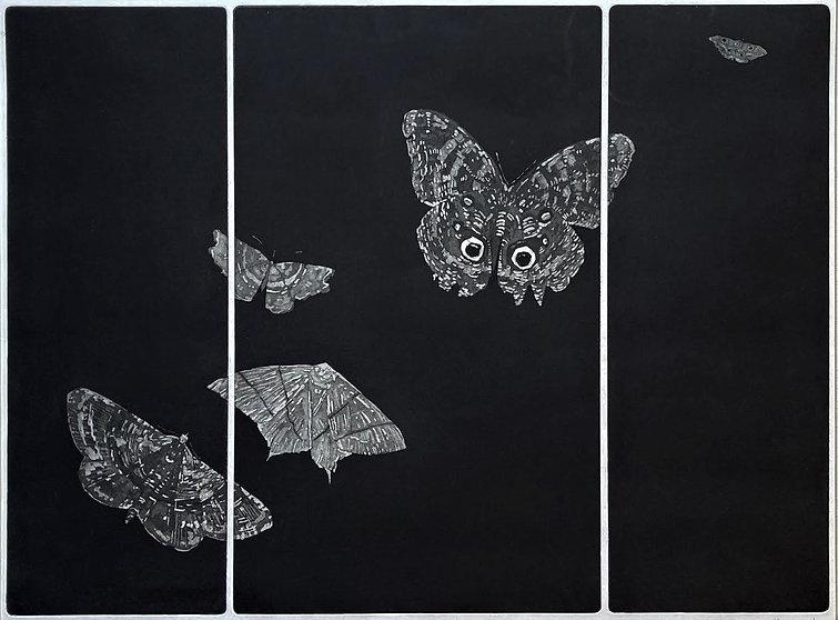moth 11.jpg