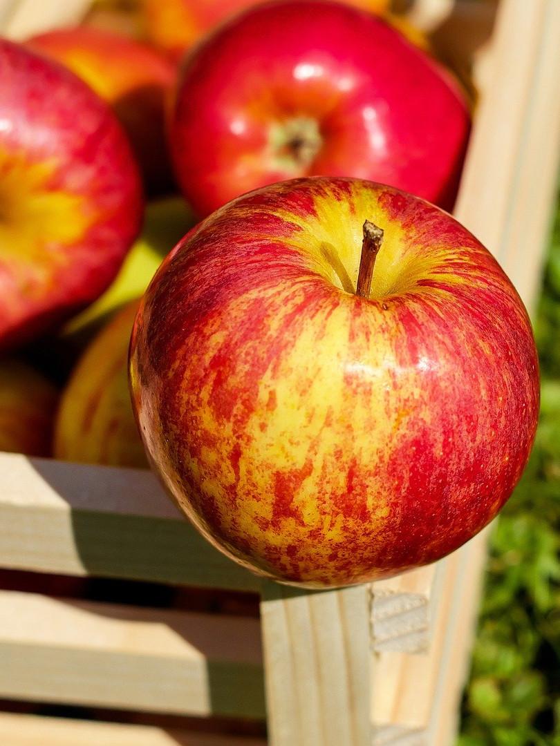 La mela Garessina