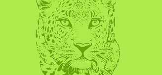 Leopard cover green.jpg