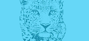 Leopard cover teal.jpg