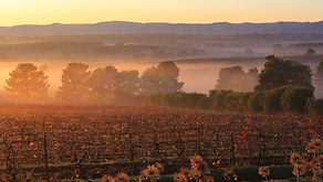 View-From-Tait-Wines-5.jpg