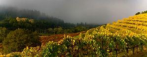 vineyard-hero-img_1810-1.jpg