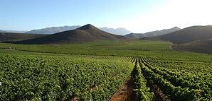 robertson-wine-valley-9.jpg