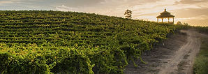 bargetto-winery-banner-3.jpg