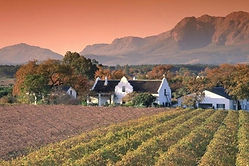 paarl_vineyards.jpg