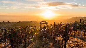 vineyards-1.jpg