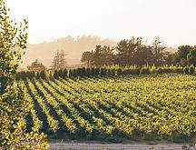 melville-winery-vineyard-east.jpg